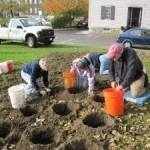 Urgent! Volunteers needed Friday October 26th for Newport beautification project-Daffodil Planting